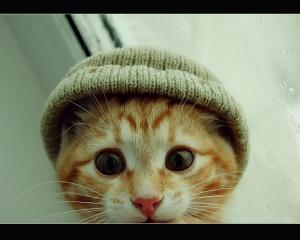 gato hipoalergenico