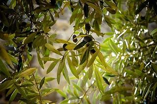 olives-789140_640