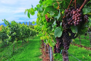 wine-2799719_640